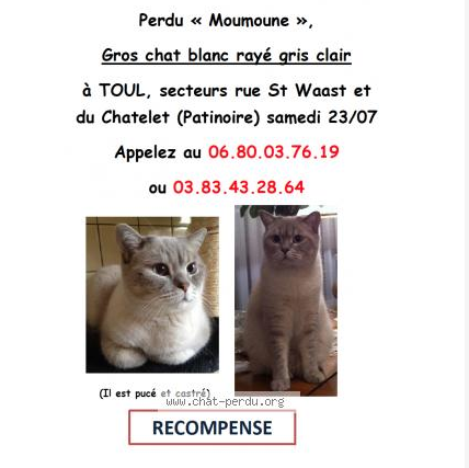 Chat moulins