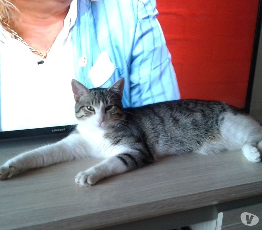 Chat amiens